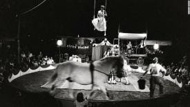 140507172815-circus-big-top-horse-horizontal-large-gallery